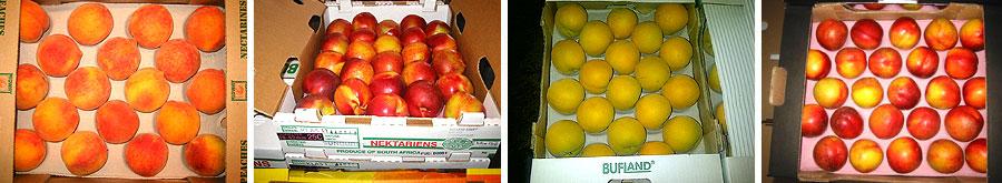 AgriLink Stone Fruit